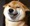 Shiba inu smile pictures